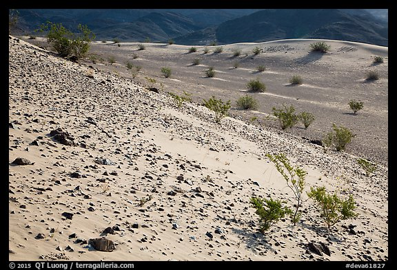 Rocks and shrubs, Ibex Dunes. Death Valley National Park (color)