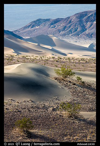 Shrubs, sand, and mountains, Ibex Dunes. Death Valley National Park (color)