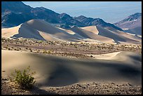 Shrubs, Ibex sand dunes, and mountains. Death Valley National Park ( color)