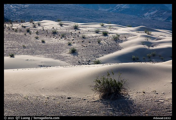 Undulating sand dunes, shrubs, and rocks, Ibex Dunes. Death Valley National Park (color)