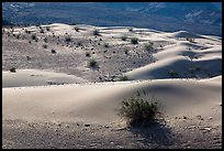 Undulating sand dunes, shrubs, and rocks, Ibex Dunes. Death Valley National Park ( color)