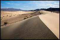 Ibex Dunes and Ibex Hills. Death Valley National Park ( color)