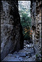 Narrow passage between cliffs, Devil's Hall. Guadalupe Mountains National Park, Texas, USA.