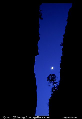 Tree and moon at night through the narrow canyon of Devil's Hall. Guadalupe Mountains National Park (color)