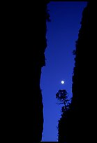 Tree and moon at night through the narrow canyon of Devil's Hall. Guadalupe Mountains National Park, Texas, USA. (color)