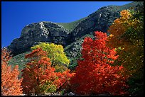 Trees in autumn foliage and cliffs,McKittrick Canyon. Guadalupe Mountains National Park, Texas, USA. (color)