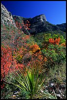 McKittrick Canyon in the fall. Guadalupe Mountains National Park, Texas, USA.
