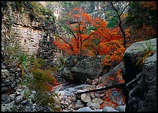 Limestone cliffs and trees in autumn color near Devil's Hall. Guadalupe Mountains National Park, Texas, USA.