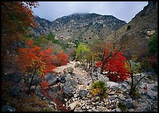 Pine Spring Canyon in the fall. Guadalupe Mountains National Park, Texas, USA. (color)