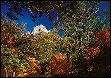 Limestone Peak framed by trees in fall colors in McKitterick Canyon. Guadalupe Mountains National Park, Texas, USA.