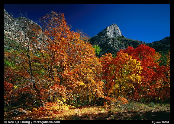 Autumn colors and cliffs in McKittrick Canyon. Guadalupe Mountains National Park (color)