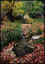 Stream in fall, Smith Springs. Guadalupe Mountains National Park, Texas, USA. (color)