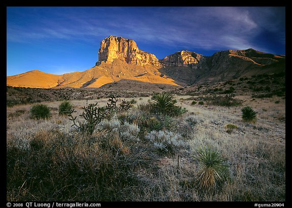 Desert vegetation and El Capitan from Guadalupe pass, morning. Guadalupe Mountains National Park (color)
