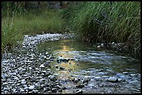 The only year-long stream in the park, McKittrick Canyon. Guadalupe Mountains National Park, Texas, USA. (color)