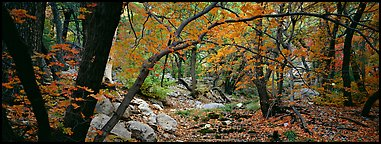 Creek in autumn. Guadalupe Mountains National Park (Panoramic color)