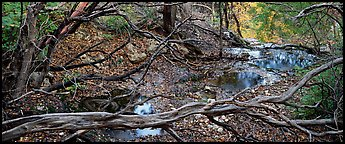 Branches and creek in the fall. Guadalupe Mountains National Park (Panoramic color)