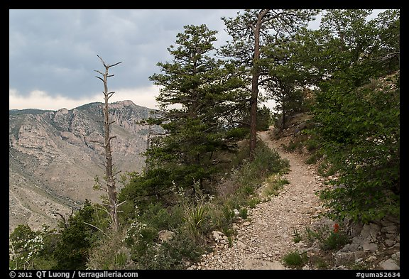 Guadalupe Peak Trail crossing higher elevation forest. Guadalupe Mountains National Park (color)