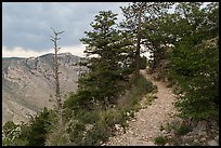 Guadalupe Peak Trail crossing higher elevation forest. Guadalupe Mountains National Park, Texas, USA. (color)