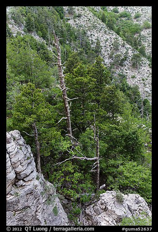 Pinnacles and conifer trees. Guadalupe Mountains National Park (color)