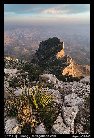 Sotol on Guadalupe Peak and El Capitan backside. Guadalupe Mountains National Park (color)