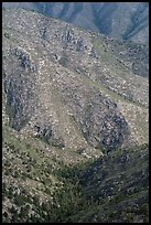 Forested ridges above Pine Spring Canyon. Guadalupe Mountains National Park, Texas, USA. (color)