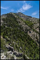 Guadalupe Peak and forested slopes. Guadalupe Mountains National Park, Texas, USA. (color)