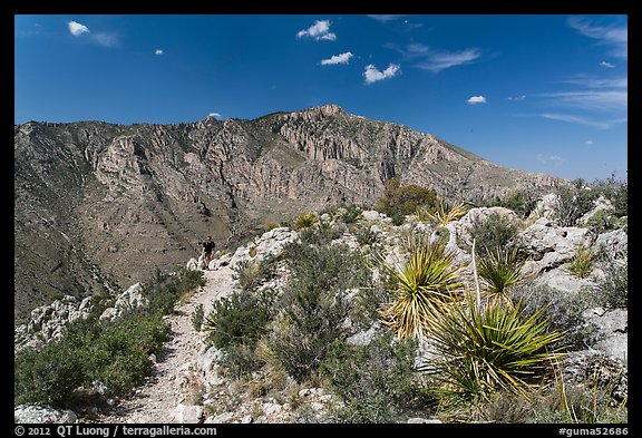 Hiker on trail above Pine Spring Canyon. Guadalupe Mountains National Park (color)