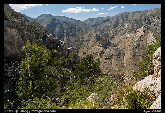 Pine Spring Canyon from above. Guadalupe Mountains National Park (color)