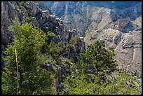 Trees and limestone cliffs. Guadalupe Mountains National Park ( color)