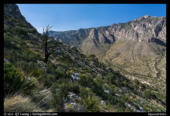 Slopes with shrubs and Hunter Peak. Guadalupe Mountains National Park (color)