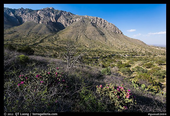 Cactus and mountains. Guadalupe Mountains National Park (color)