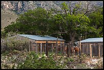 Frijole Ranch stables. Guadalupe Mountains National Park, Texas, USA. (color)