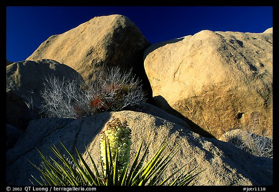 Yucca and boulders. Joshua Tree National Park (color)