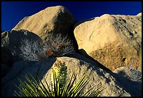 Yucca and boulders. Joshua Tree National Park, California, USA.
