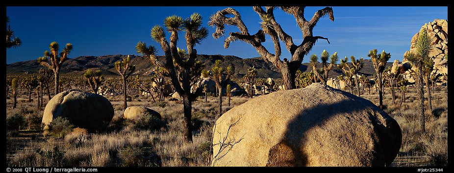High Mojave desert scenery with boulders and Joshua Trees. Joshua Tree National Park (color)