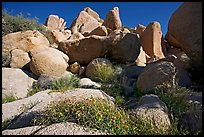 Wildflowers and boulders. Joshua Tree National Park, California, USA.