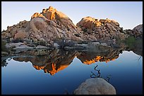 Rocks reflected in reservoir, Barker Dam, sunrise. Joshua Tree National Park, California, USA. (color)