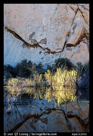Rock wall, willows, and reflections, Barker Dam, early morning. Joshua Tree National Park (color)