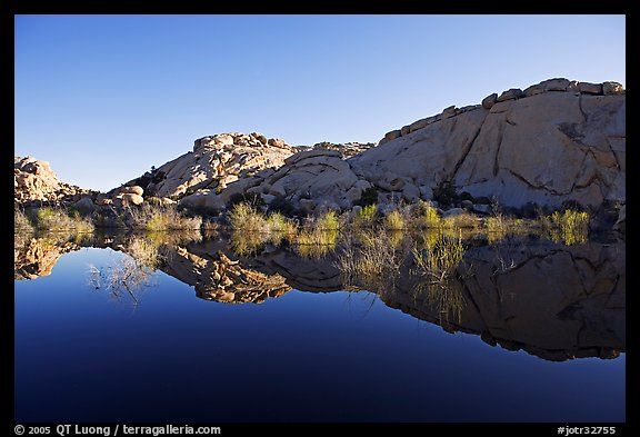 Rocks, willows, and Reflections, Barker Dam, morning. Joshua Tree National Park (color)