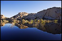Rocks, willows, and Reflections, Barker Dam, morning. Joshua Tree National Park, California, USA. (color)