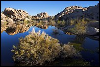 Barker Dam pond and rock formations, morning. Joshua Tree National Park, California, USA.