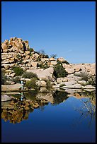 Photographer at Barker Dam. Joshua Tree National Park, California, USA.