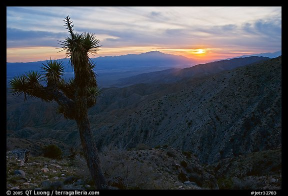 Yucca at sunset, Keys View. Joshua Tree National Park (color)