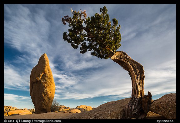 Leaning juniper and pointed monolith. Joshua Tree National Park (color)