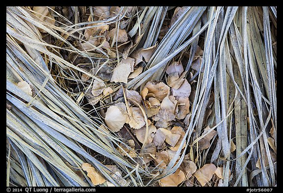Ground view of fallen palms and cottonwood leaves. Joshua Tree National Park (color)