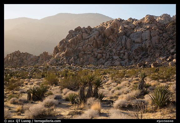 Boulder outcrop and ridge, Indian Cove. Joshua Tree National Park (color)