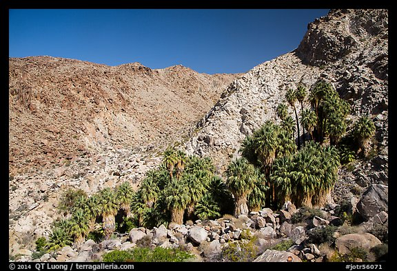 Rocky canyon and 49 Palms Oasis. Joshua Tree National Park (color)