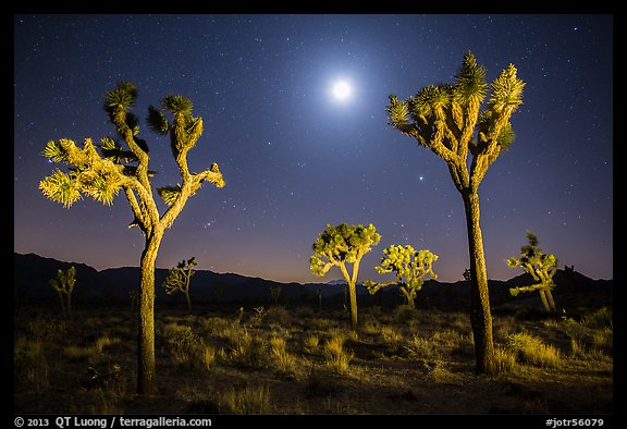 Joshua trees and moon at night. Joshua Tree National Park (color)