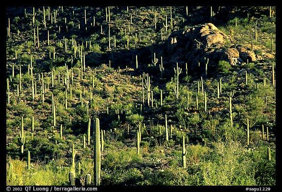 Saguaro National Park Map West Saguaro National Park Arizona