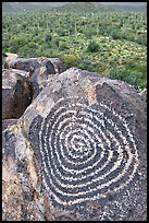Circular Hohokam petroglyph. Saguaro National Park, Arizona, USA. (color)